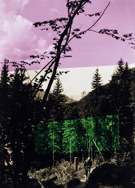 Roter Himmel, grüner Wald