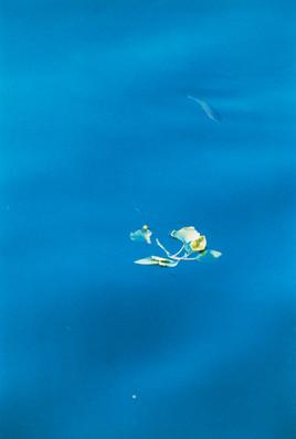 Fisch in Blau