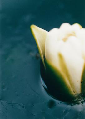 Halbe Blüte