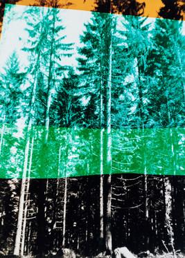 Wald in vier Farben
