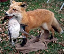 Fox with teal.jpg