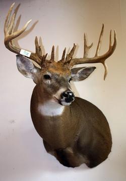 Deer-21_pointer.jpg