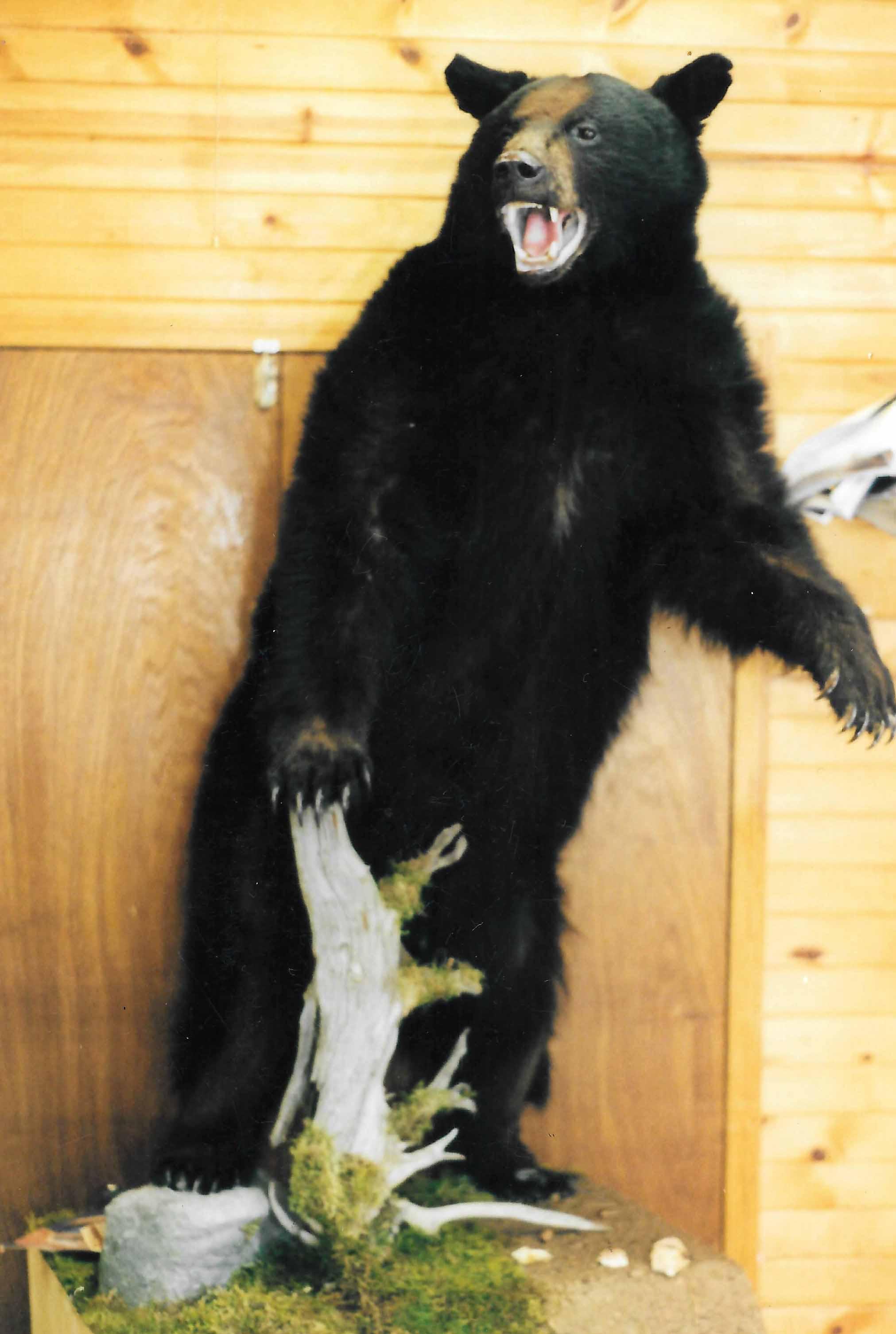 Bear with scene.jpg