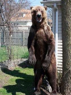Bear 005.jpg