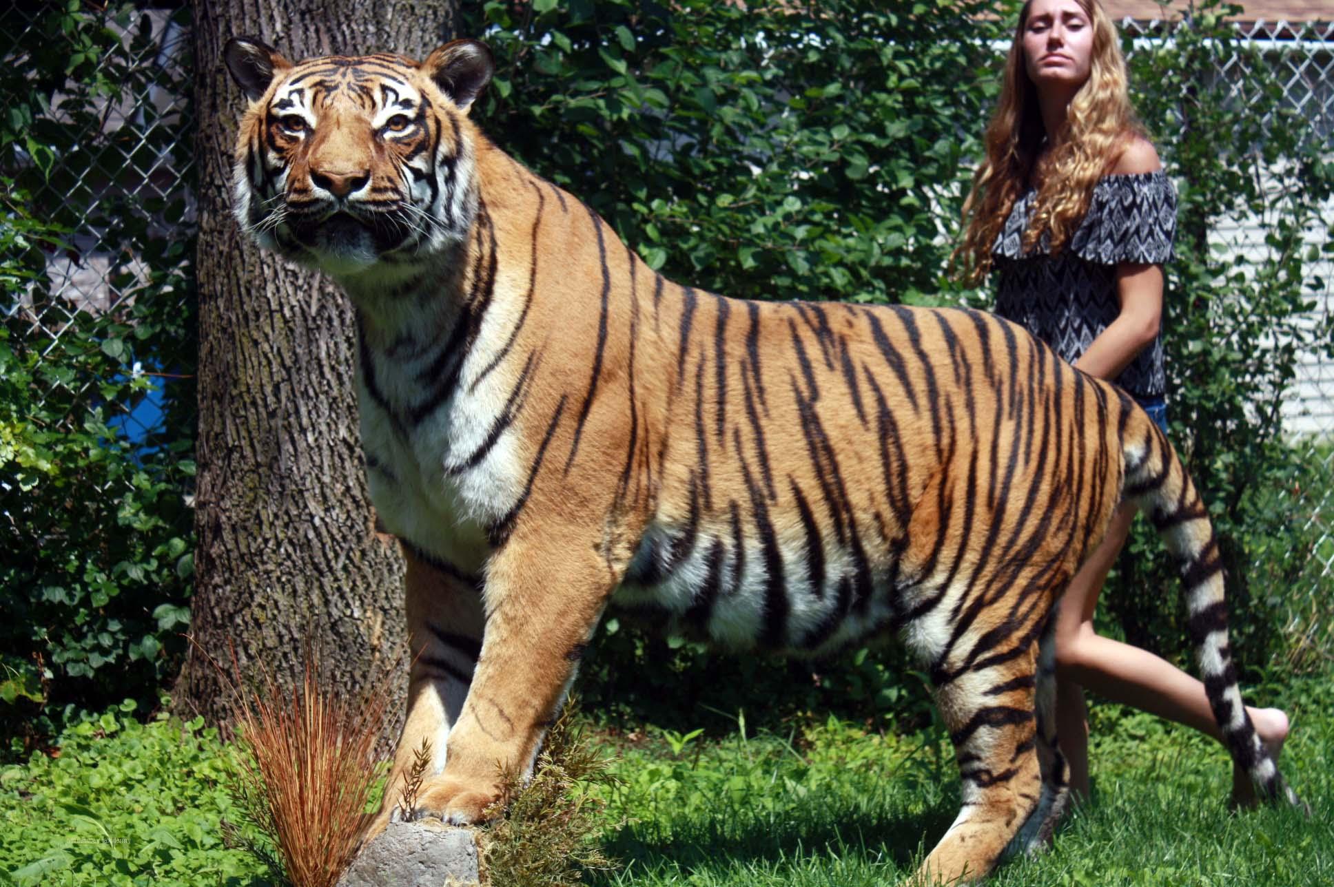 Tiger Princess