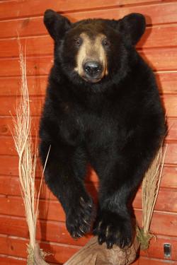 half bear.jpg