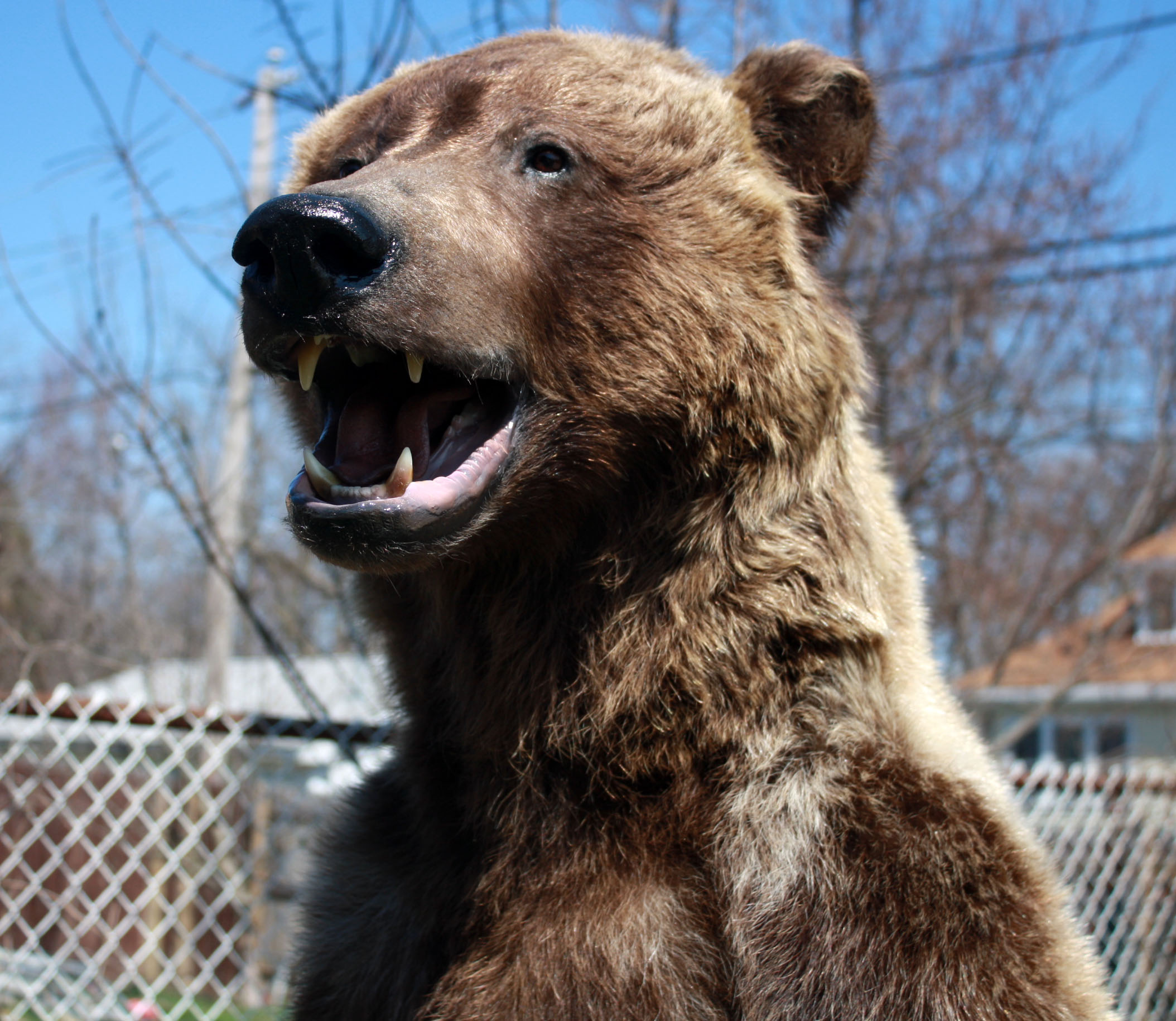 Bear 004.jpg