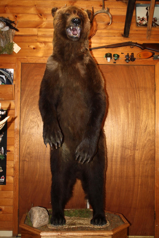 Grizzly bear LS.jpg