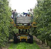 Perenboomgaardwandeling-25.jpg