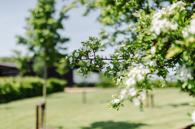Fruit Trees Primrose Hill Farm Wedding Venue with view of the cotswolds