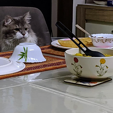 food and cat.png