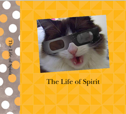 A Special Cat's Life in Photos