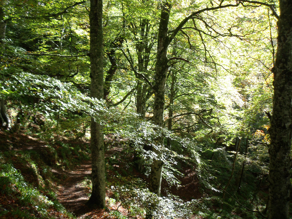 Sithean Wood