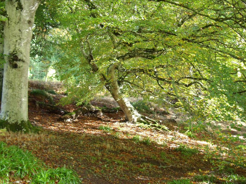 Highland woodland
