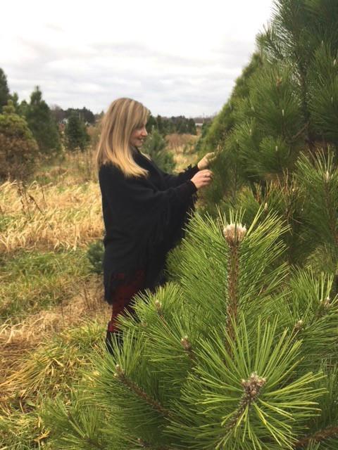 Tree-Tops Glisten