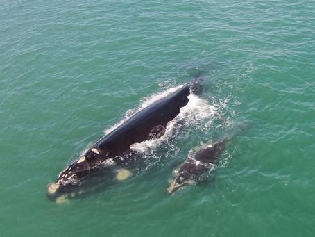 5 lugares para observação da vida silvestre no litoral sul do Brasil