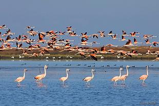 PARNA Lagoa dos Peixes.png
