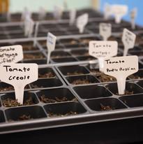 seed week-75.jpg