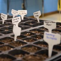 seed week-73.jpg