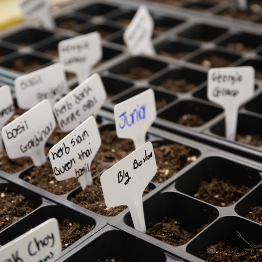 seed week-76.jpg