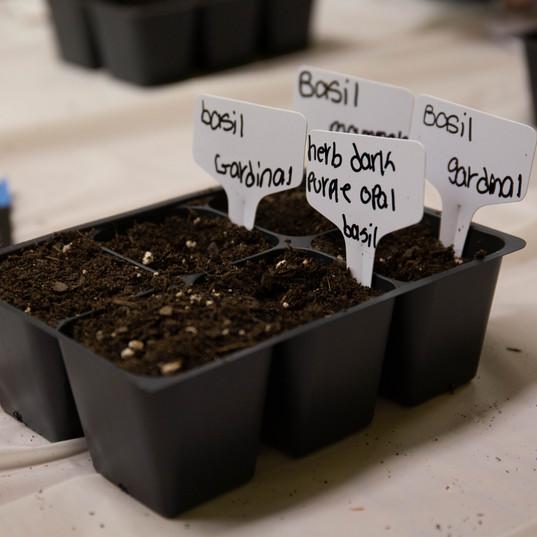 seed week-61.jpg