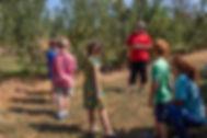 web7 Orchard-4.jpg