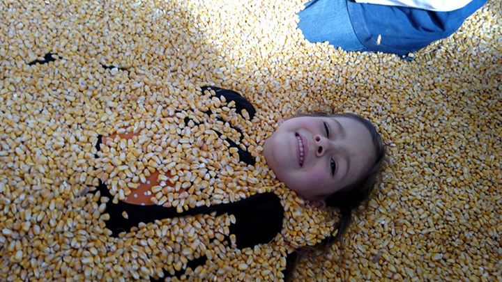 Victoria buried by corn in the corn crib!!!!