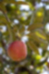 web7 Orchard-3.jpg