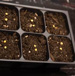 seed week-72.jpg