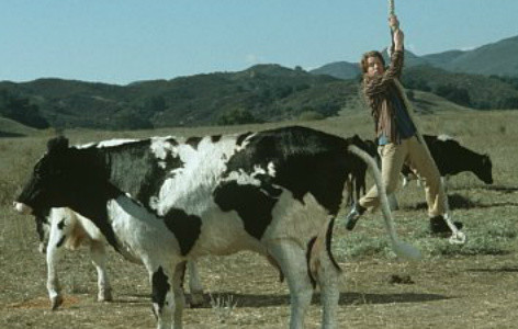 Seth about to hit a cow
