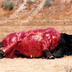 Skinned Buffalo Test
