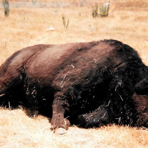 Dead Buffalo Test