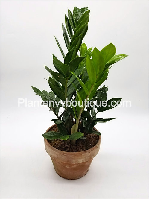 "8"" ZZ Plant it Terracotta Planter"