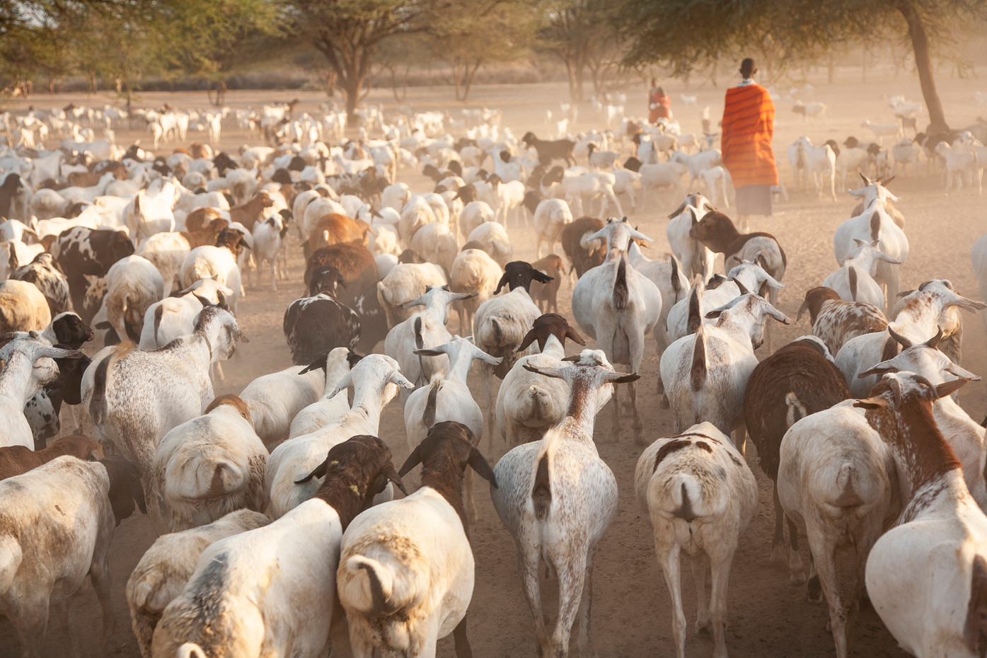 Masai woman & goats near Lake Natron, Tanzania
