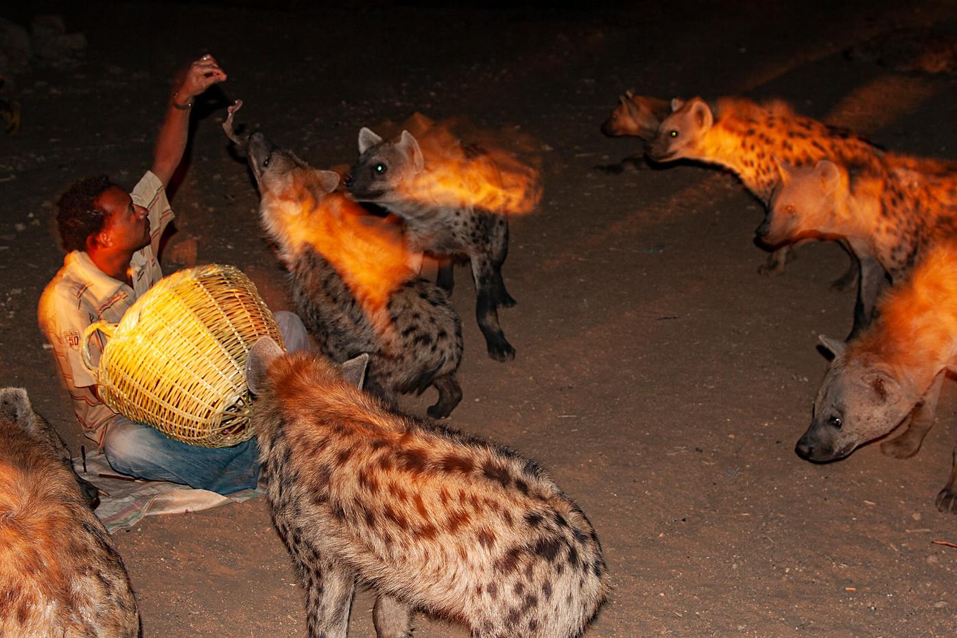 Hyena Man in Harar, Ethiopia