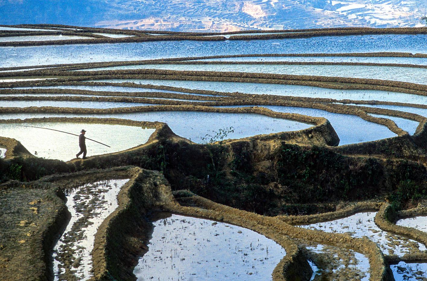 Rice terraces & farmer in Yuanyang, China