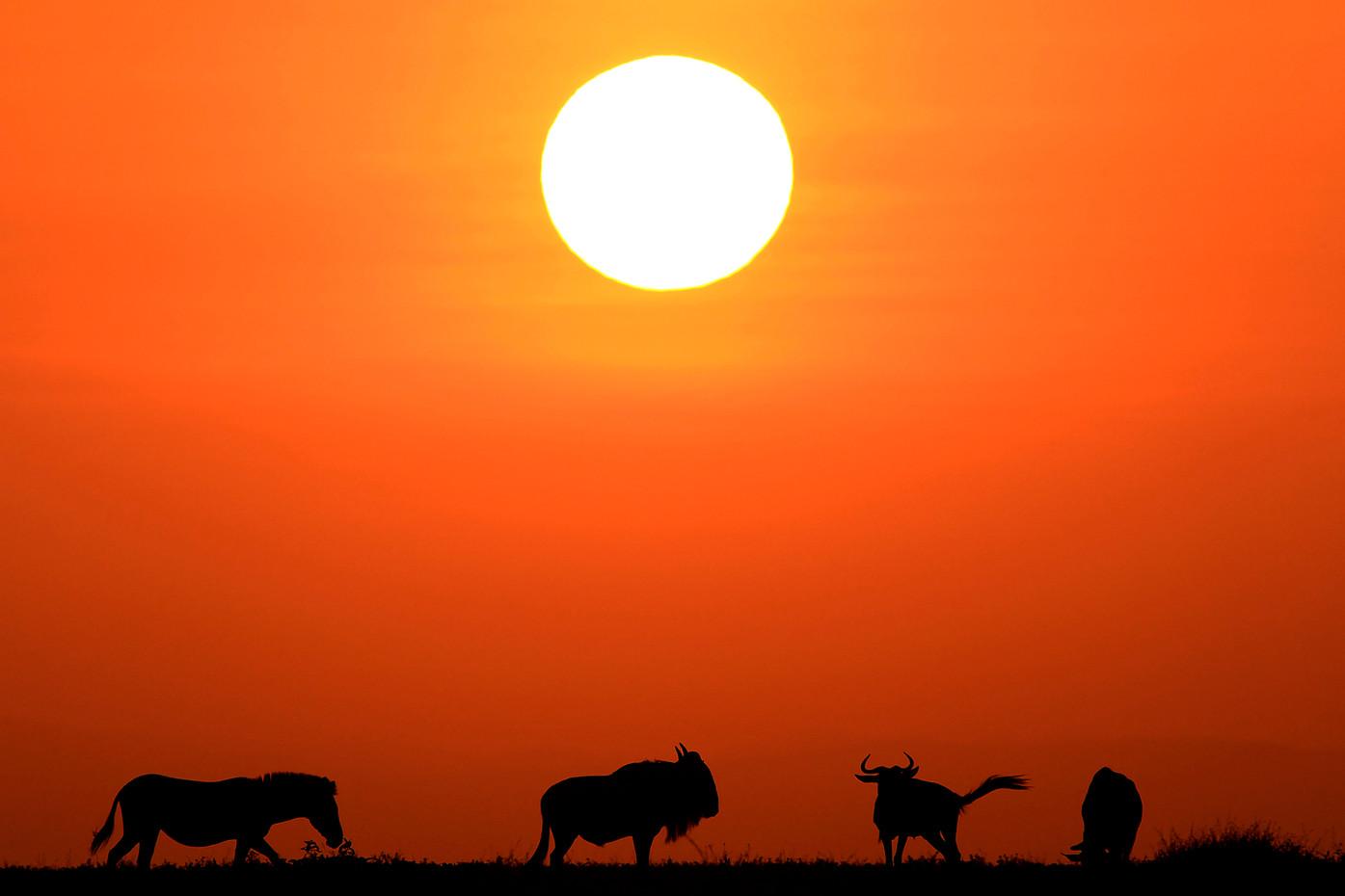Migration at sunrise in the Serengeti NP, Tanzania