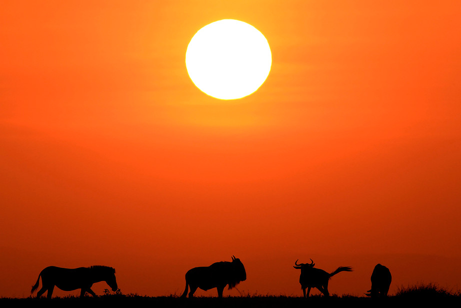 Migration at sunrise in the Serengeti NP, Tanzania