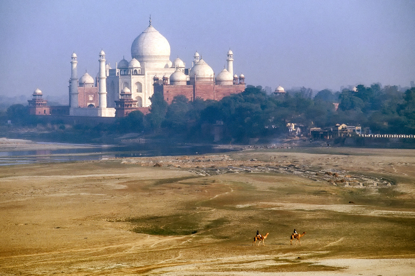 Camels in front of the Taj Mahal in Agra, Ind