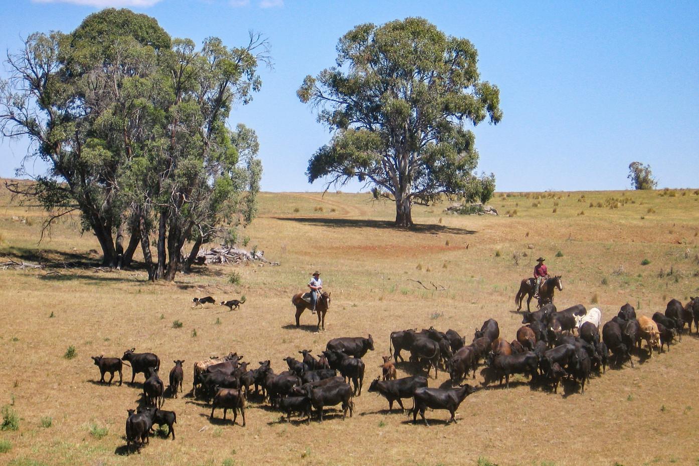 Jackaroos in the Blue Mountains, Australia