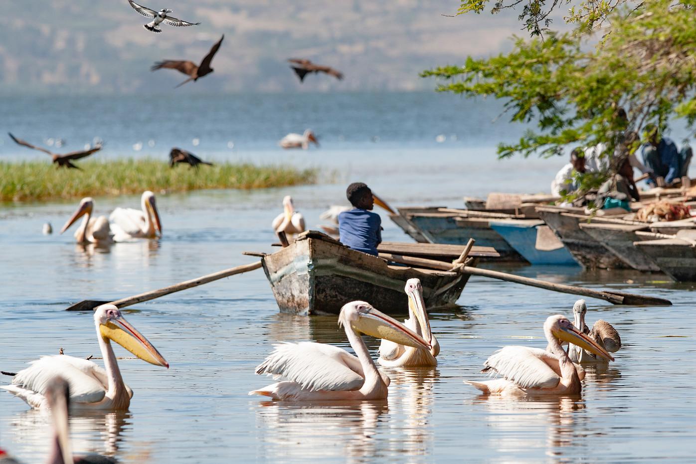Fish market at Lake Awassa, Ethiopia