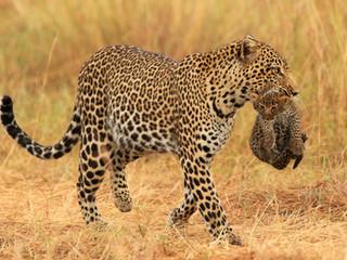 Safari Babies