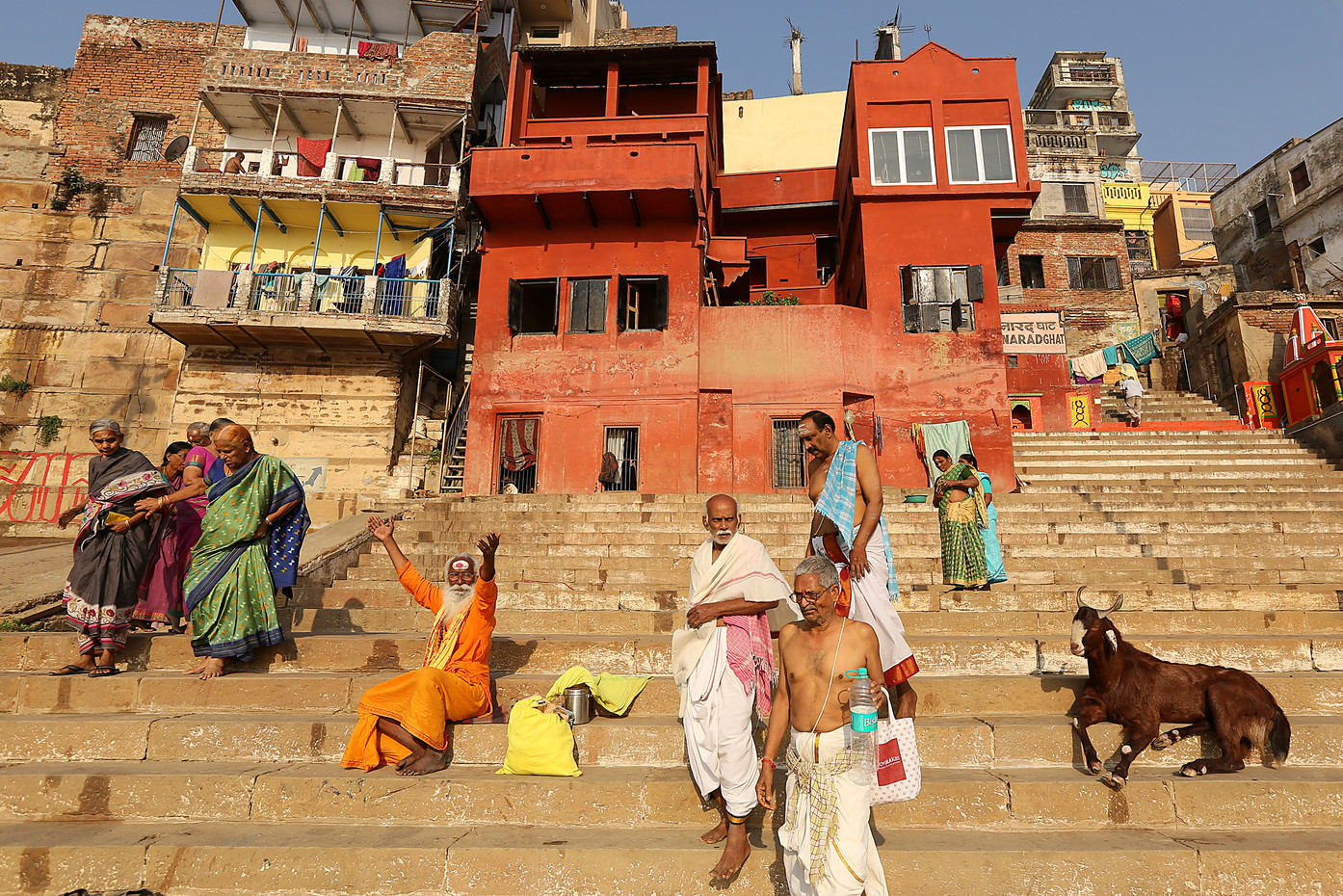 Sadhu, Hindu devotees & billy goat in Varanasi, India
