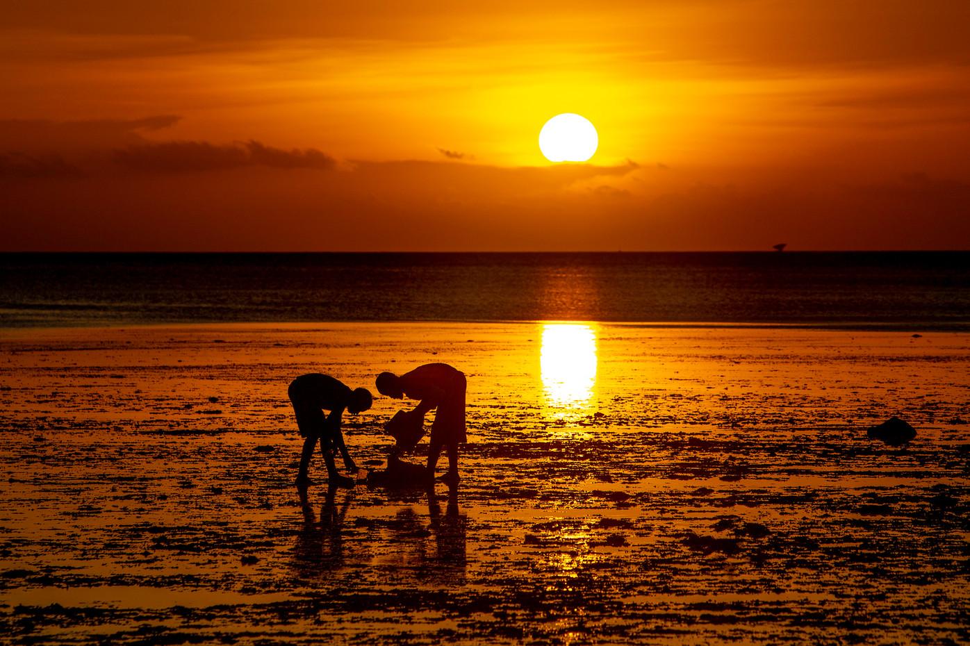 Seaweed collection at sunset on Zanzibar, Tanza