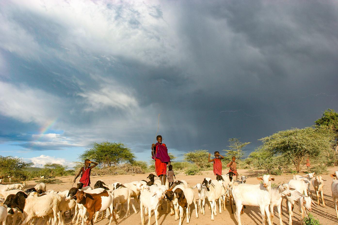 Masai herd boys & goats, Tanzania