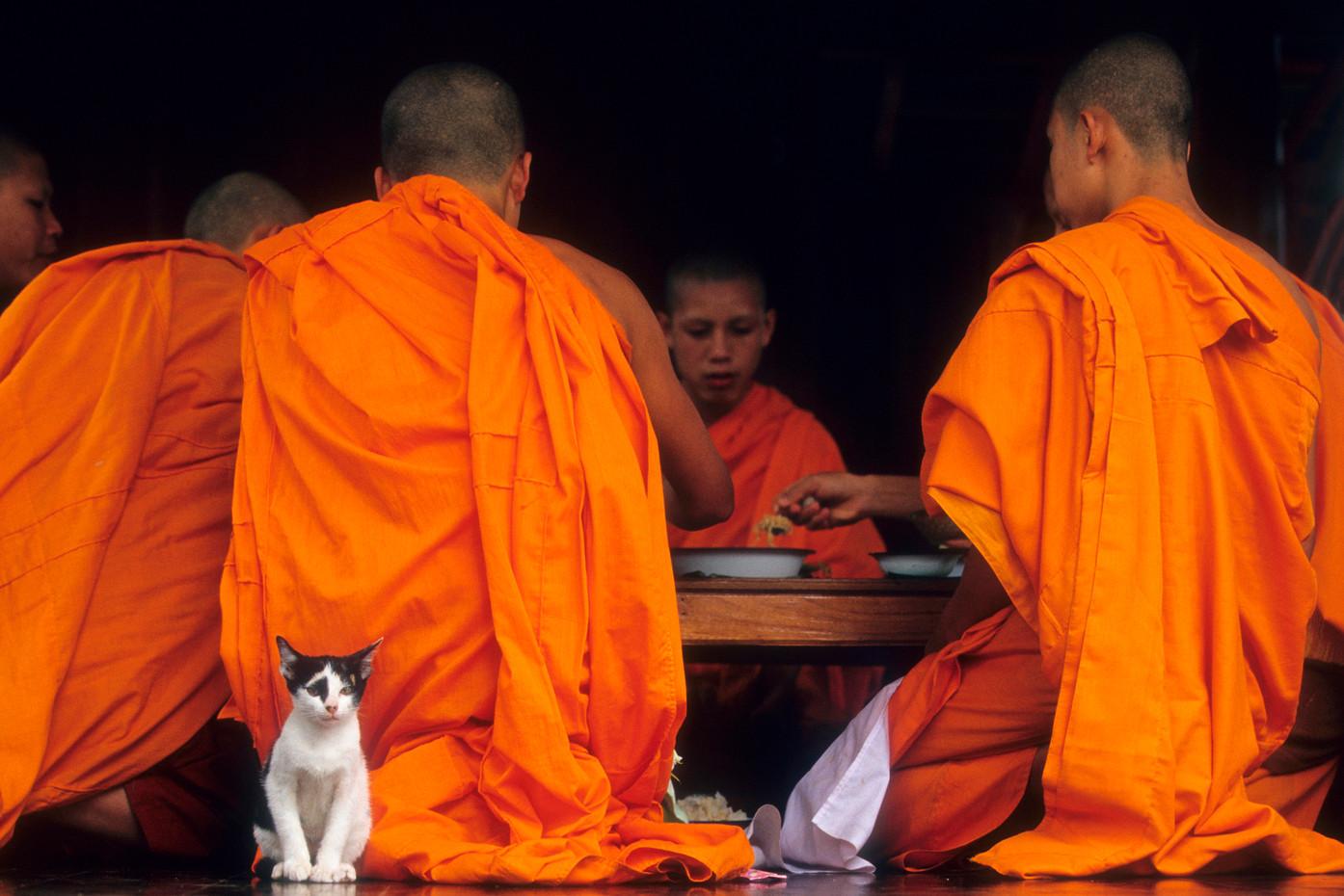 Novice monks & kitten in Luang Prabang, Laos