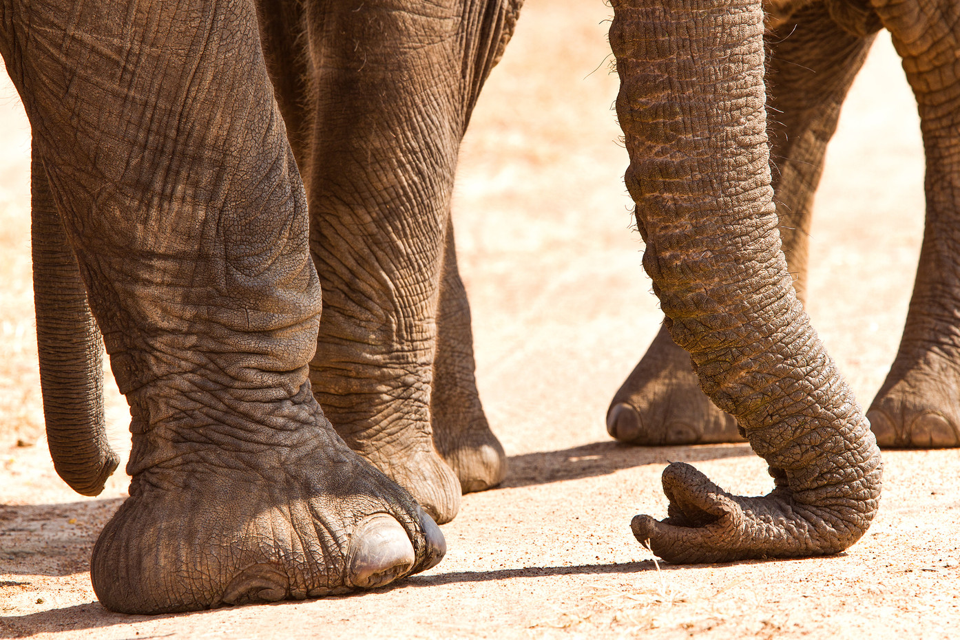 Elephants in Manyara NP, Tanzania