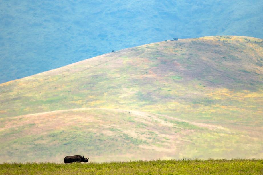 Black Rhino in the Ngorongoro Crater, Tanzania
