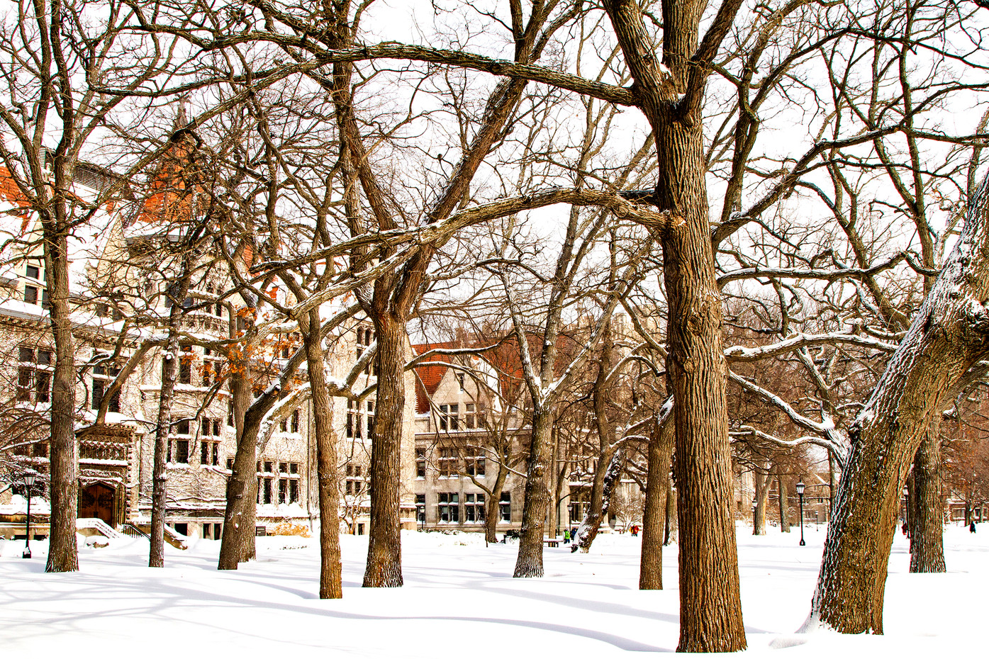 University of Chicago in winter, USA