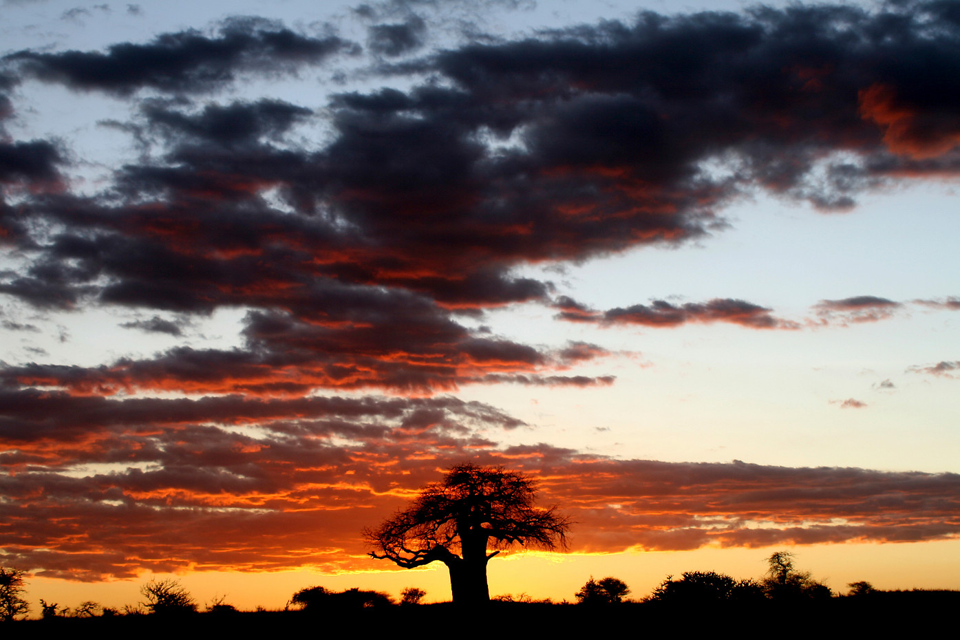 Baobab tree at sunset in Tarangire NP, Tanzania